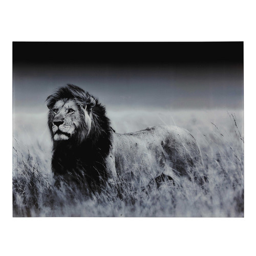 Tableau lion en plexi 161 x 123 cm machaka maisons du monde for Les lions du meuble