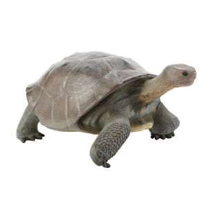Statue Tortue Galapagos